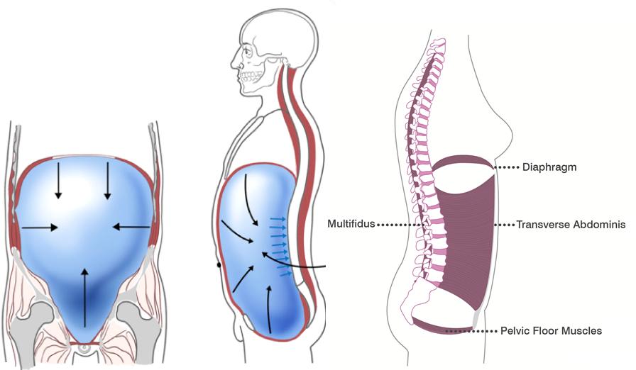 腹腔とインナーマッスルバランス