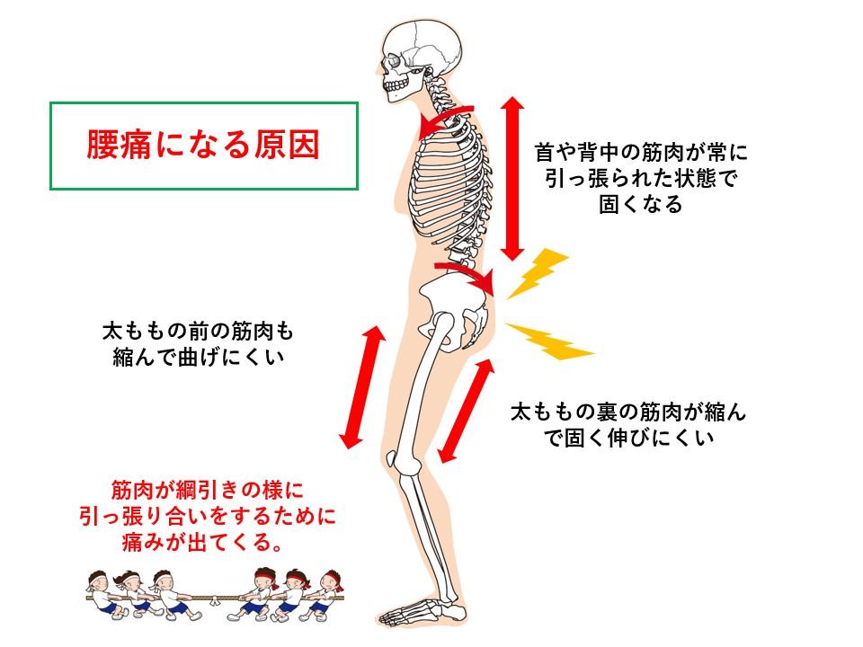 人体とタンパク質バランス